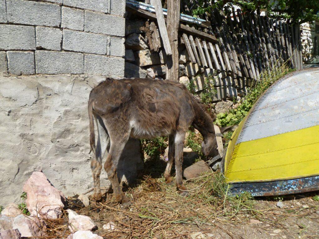 Ee nzelcht verzorgde ezel