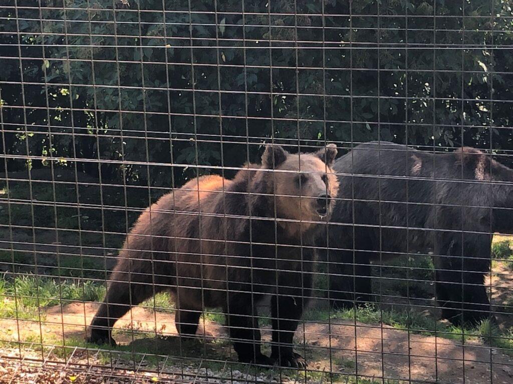Libeart Bear Sanctuary - Rondreis Roemenie