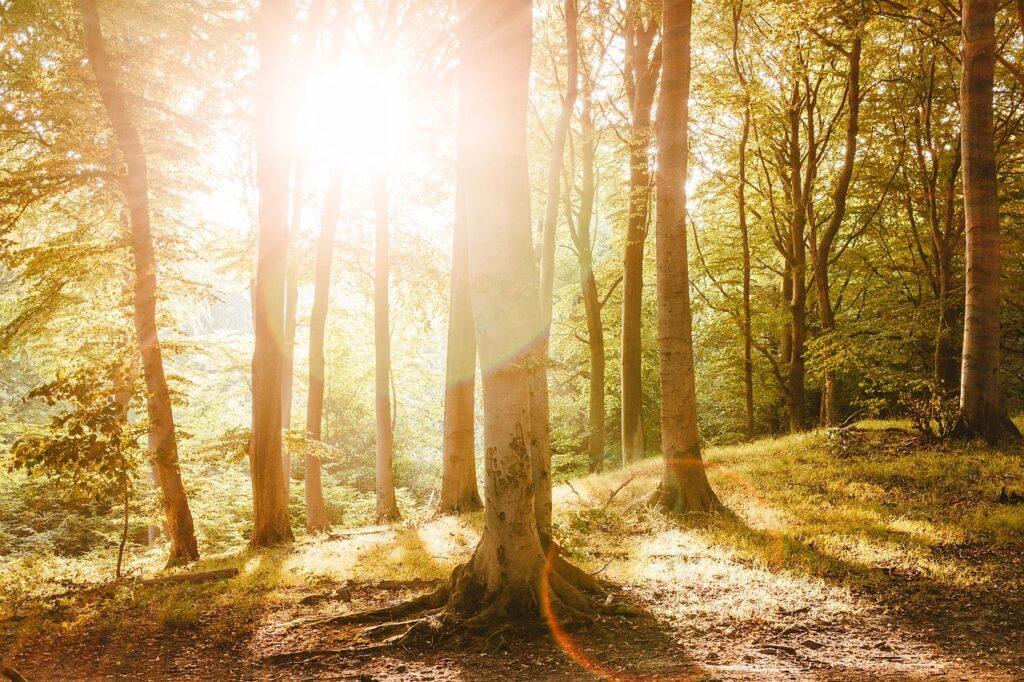 Beukenbos Nationaal Park Jasmund